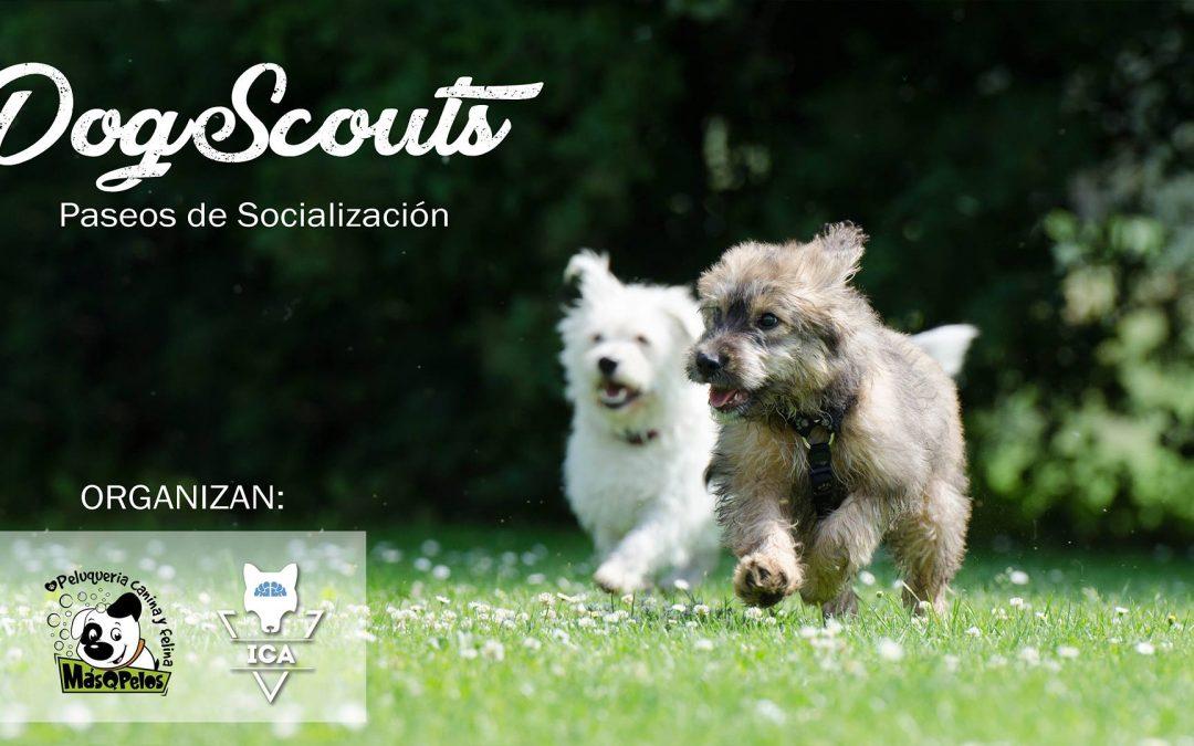 Paseo de Socialización | DogScouts