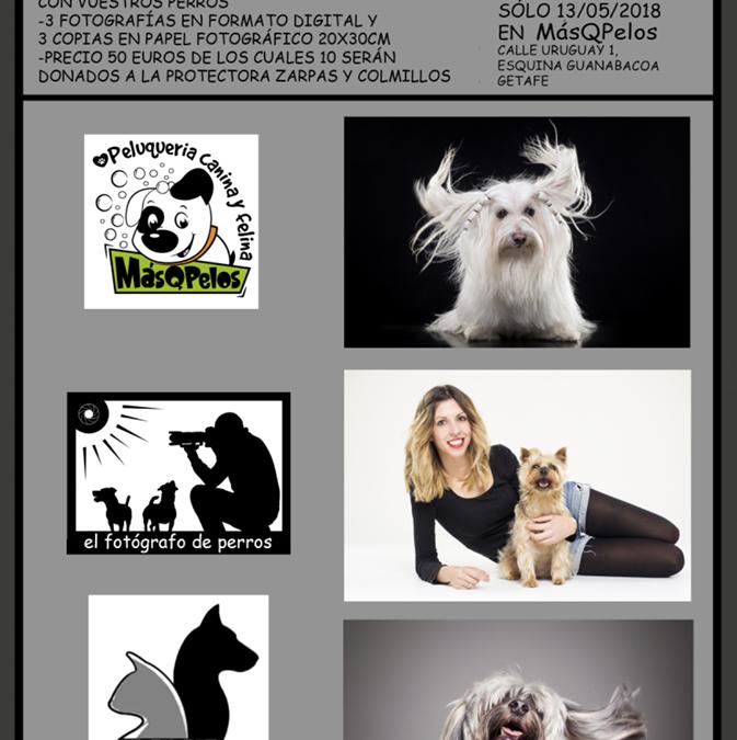 Sesión fotográfica con El fotógrafo de perros
