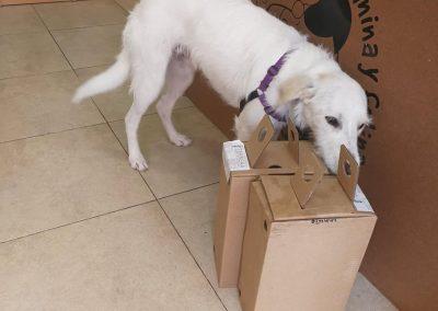 Tienda de productos para perros y gatos